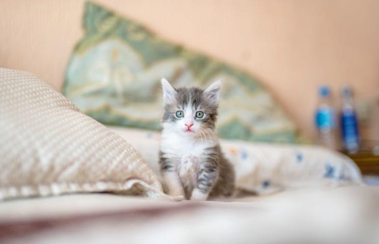 Good Vibes - Czy obecność kota może korzystnie wpłynąć na nasze zdrowie? 1