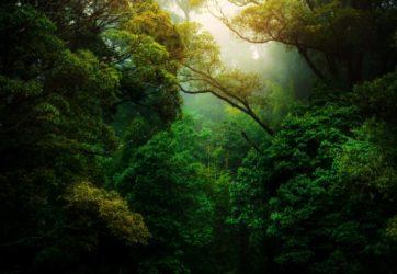 Good Vibes - Netflix w walce ze zmianami klimatycznymi 7